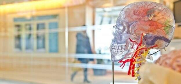 Neurotransmissores: tudo o que você precisa saber sobre eles