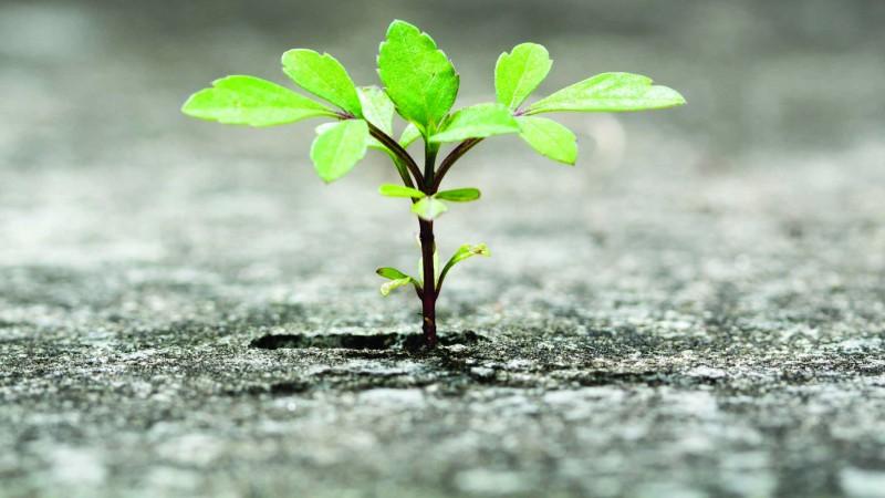 Resiliência: 10 dicas se tornar uma pessoa mais resiliente | Vittude